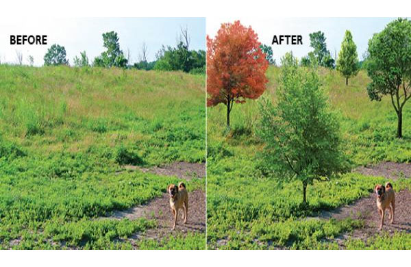 The City of Waterloo is asking citizens to help pay for 10 trees to plan in a dog park. (Image courtesy iFundWateroo)