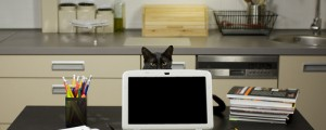 Black Cat with Laptop