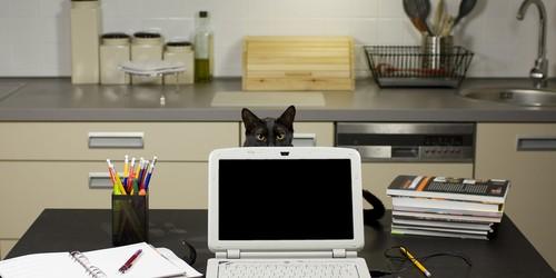 Black Cat with Laptop
