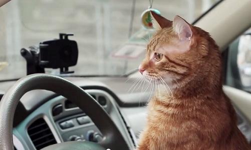 cat uber