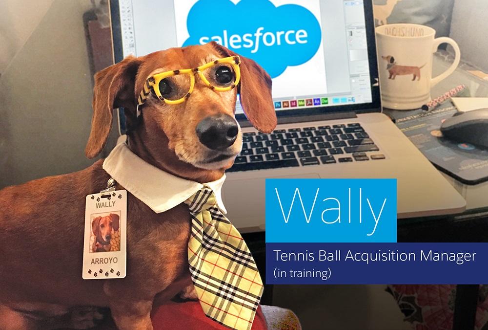 Wally-at-work