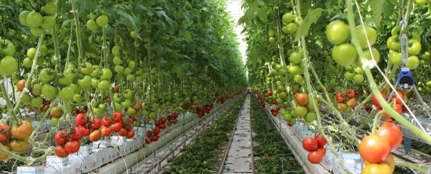 Greenhouse produce company using digital transformation to - Increase greenhouse production cost free trick ...